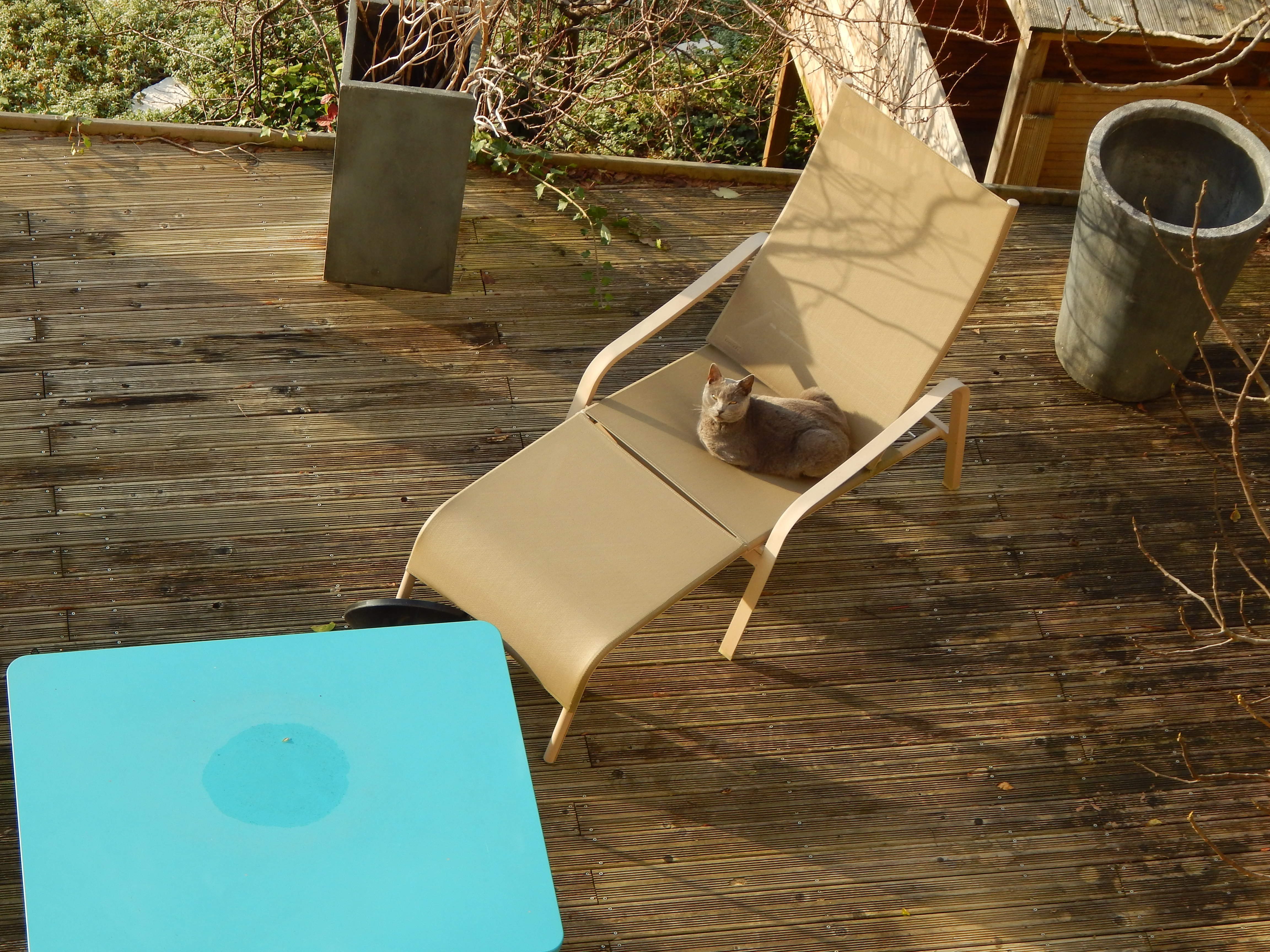 chat sur chaise longue