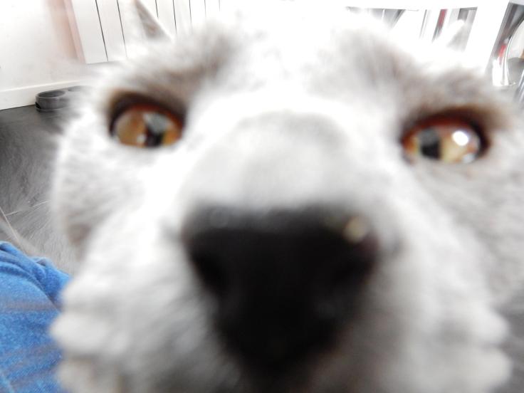 chat zoom.JPG